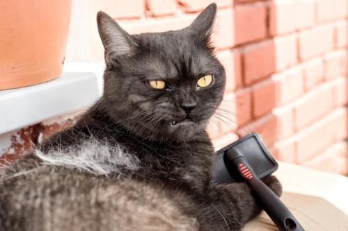 怒る寸前の猫