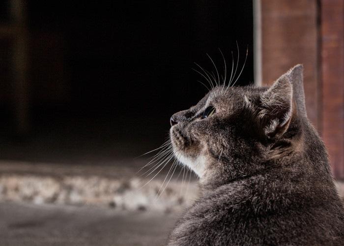 空を見上げる猫
