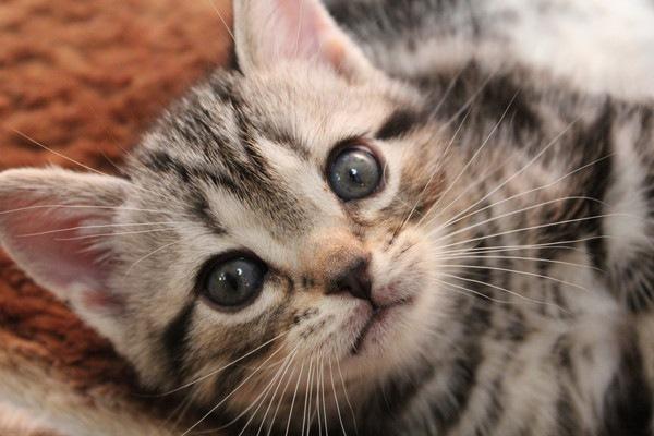 子猫がじっと見る