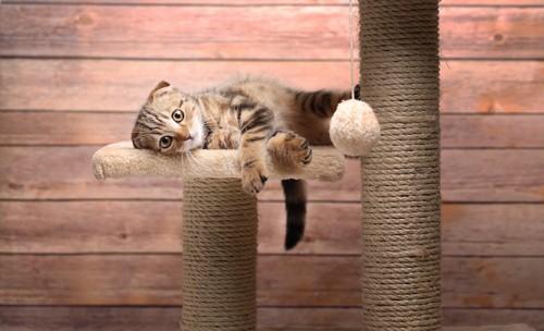 キャットタワーに猫転がる猫
