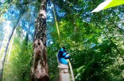 トムが木を登ります
