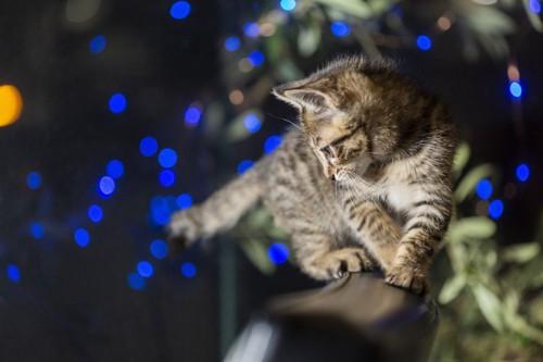 夜活動する子猫