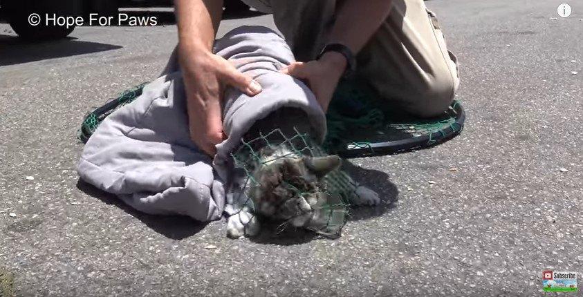 網に捕らわれた子猫