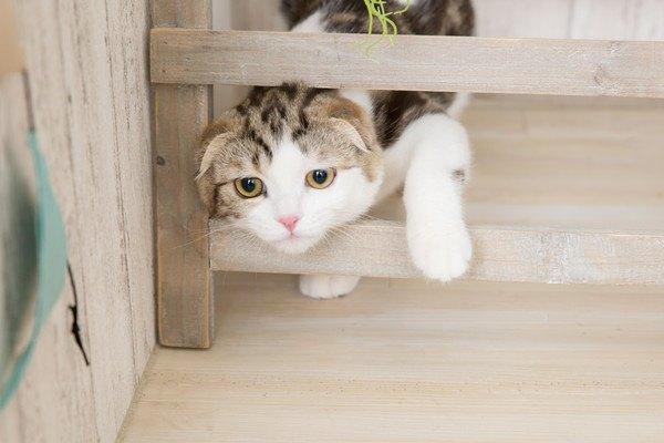 はしごの間から顔を出す猫