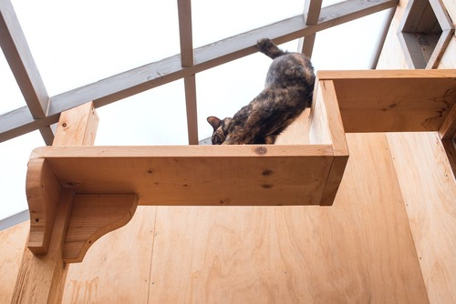 キャットウォークを歩いている猫
