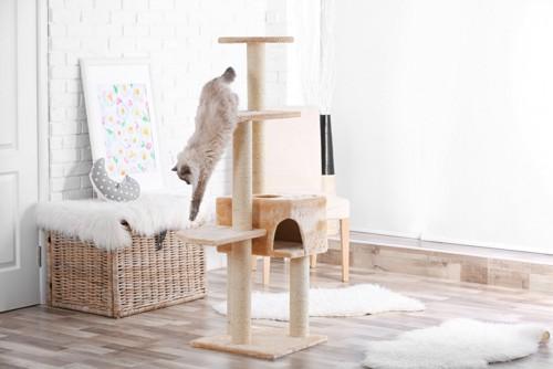 キャットタワーを下る猫
