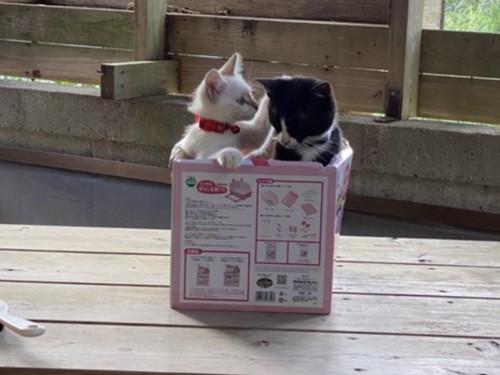 2匹の遊ぶ猫