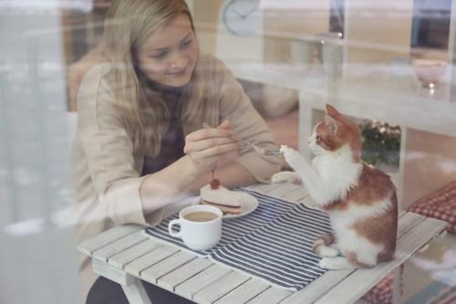 カフェでケーキを食べる女性とじゃれる子猫