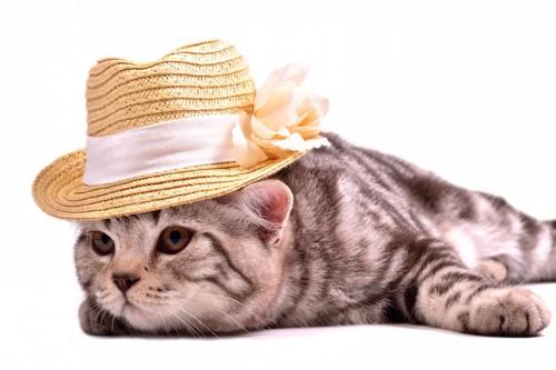 帽子をかぶる寂しげな猫