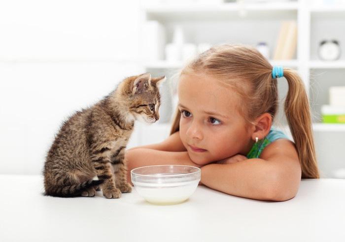 猫にミルクを与える女の子