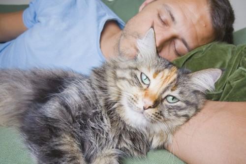 腕枕してもらう猫