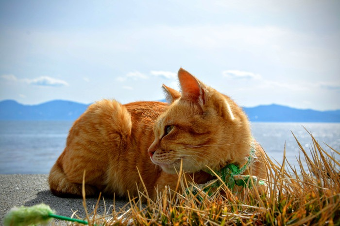 海と猫の写真