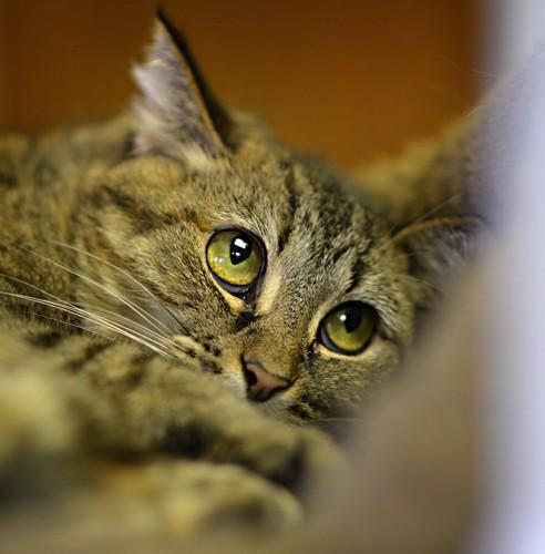 視線を外してくつろぐ猫