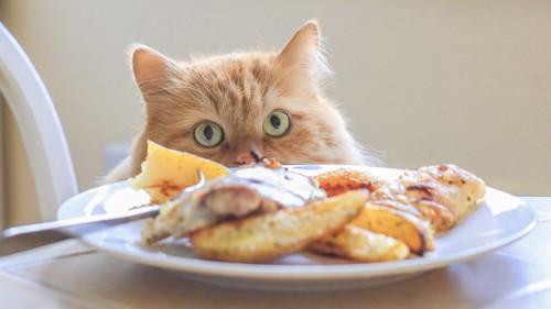 テーブルの上の料理と椅子にのって見ている猫