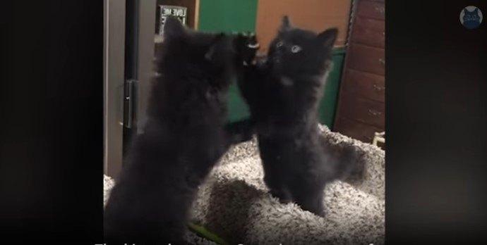 鏡の前の子猫