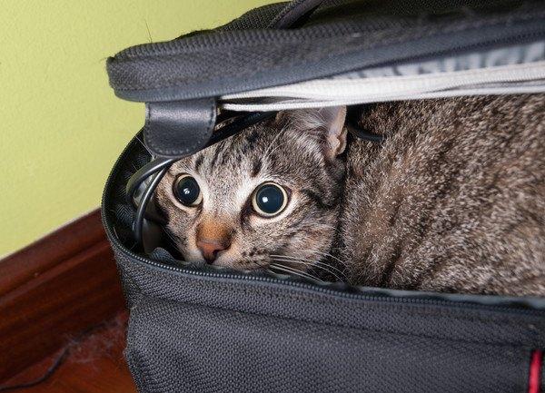 ケージの間から顔を出してくつろぐ猫