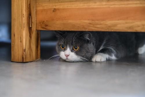 家具の下に隠れている猫