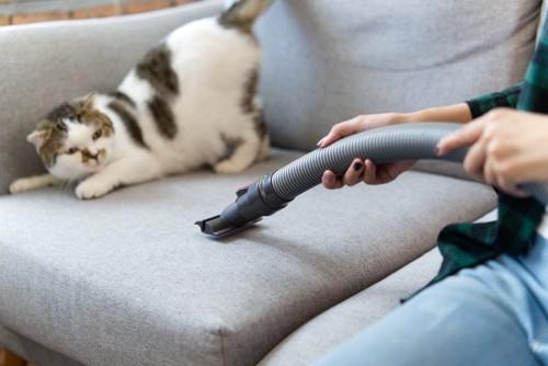 掃除機に警戒する猫