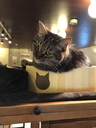 台の上に乗る猫