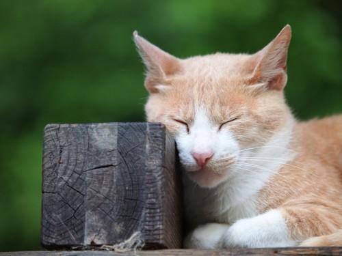 切り株で寝る猫