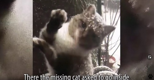 窓をひっかいている猫