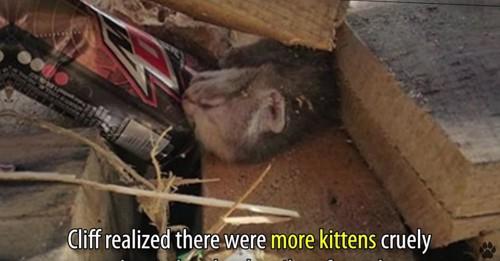 木材の下にキジトラ猫
