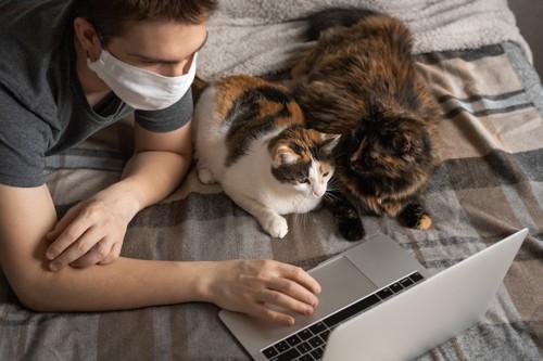 パソコンを触る男性の横に座る二匹の猫