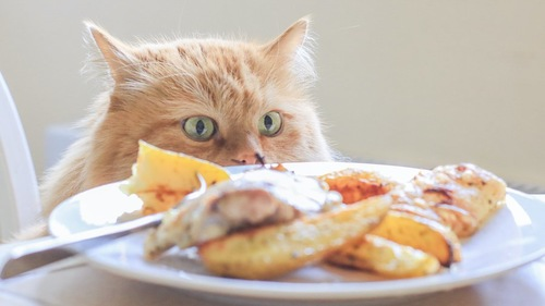テーブルの上の食事を狙う猫