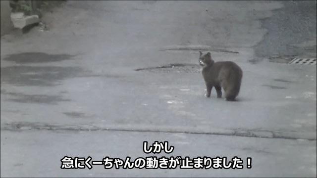 キョロキョロする猫