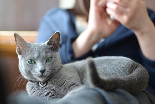携帯を見る飼い主の膝の上に乗る猫