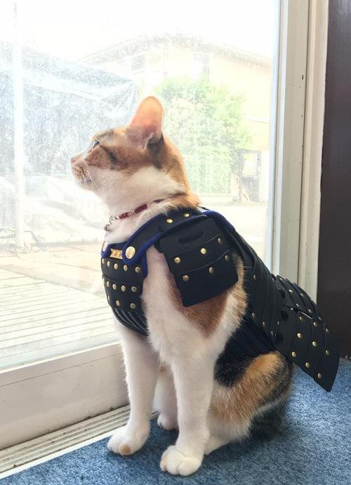 猫の甲冑2