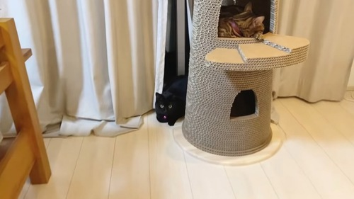 黒猫とタワーの中にいるベンガル