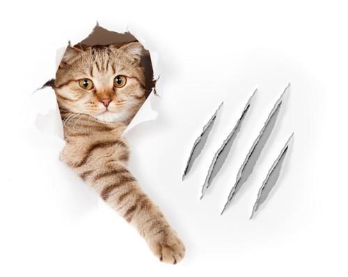 引っ掻き傷のある壁から顔をだす猫