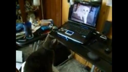 パソコンを見る
