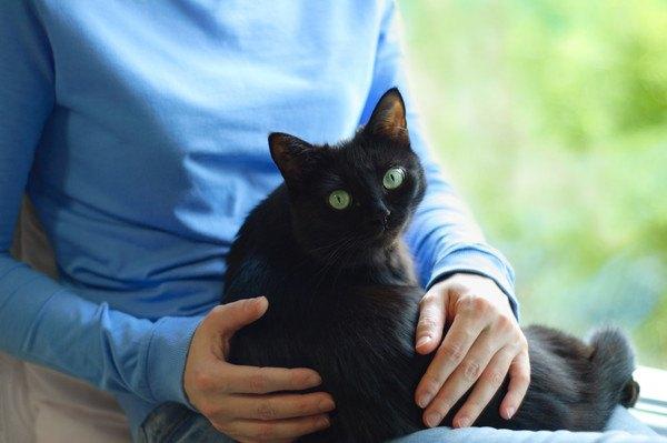 おとなしく膝でくつろぐ黒猫