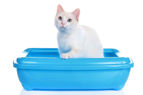トイレの縁に手をかける猫