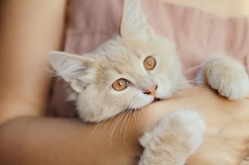 抱かれながら噛む猫
