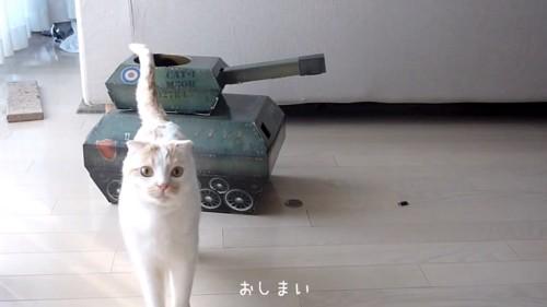 おもちゃの戦車の前に立つ猫