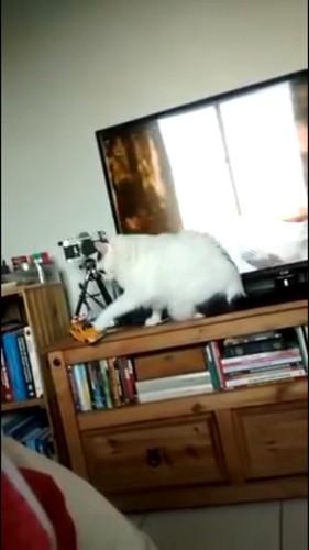 逆の手でちょっかいをかける猫