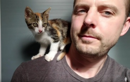 男性の肩に乗る子猫