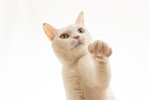手招きする猫