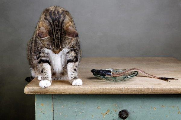 テーブルの上でうなだれる猫