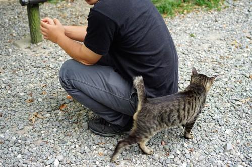 しゃがんだ男性の後ろに擦り寄る猫