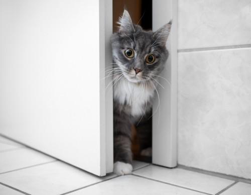 ドアから出る猫