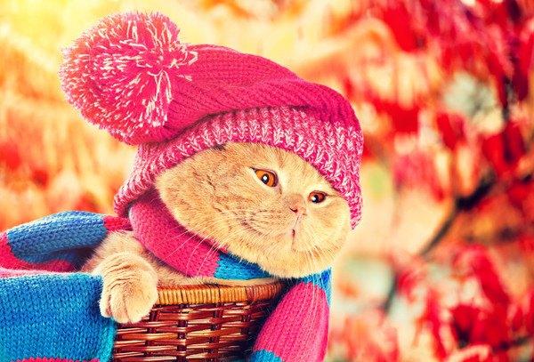 ニット帽をかぶる秋風の猫