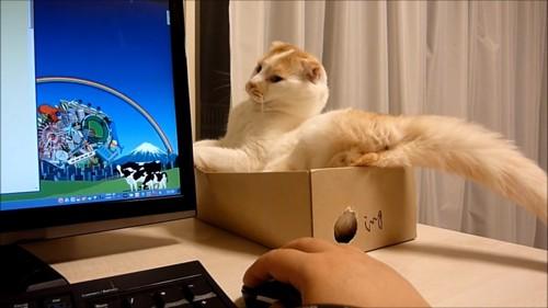 パソコンの方を見る猫