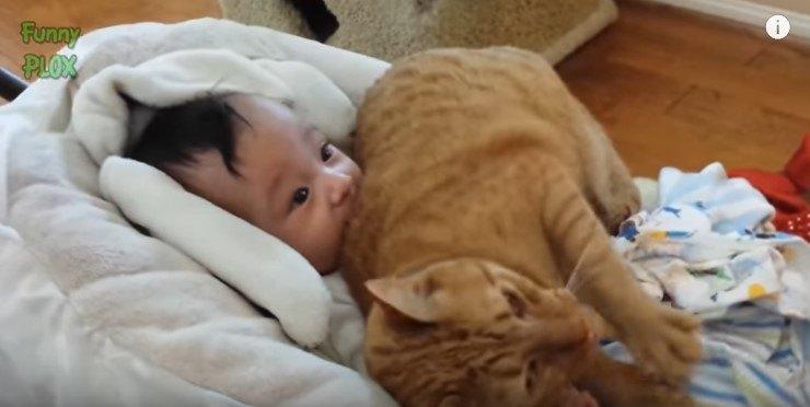 乳児にのしかかる猫