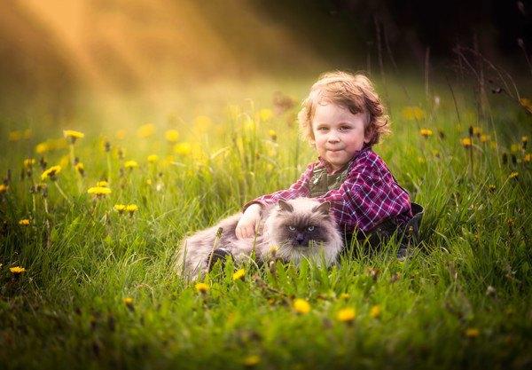 草原の猫と子ども