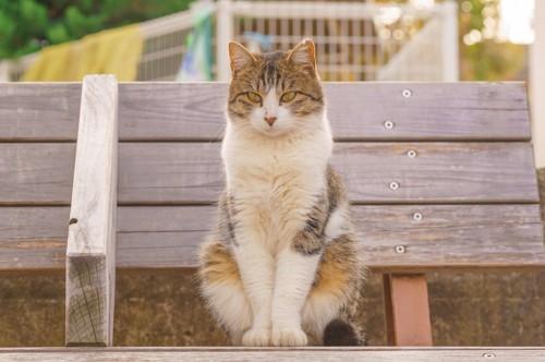 ベンチにお行儀良く座る猫