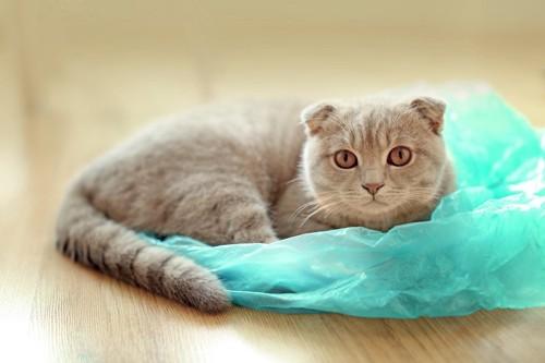 青いビニール袋の上に乗る猫